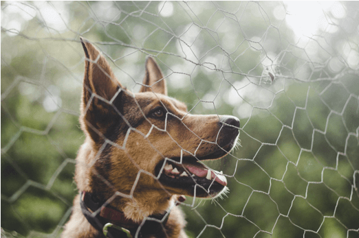 Dog put behind fence due to biting